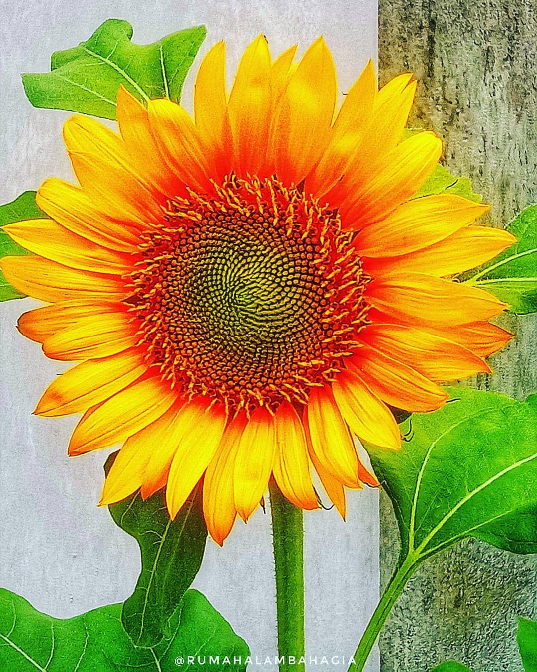 Siapa Pun Yang Sabar Dan Tekun Akan Mekar Seperti Bunga Akan Indah Seperti Purnama Dan Menakjubkan Seperti Kupu Kupu Indonesiaberkebun Berkebundiru Plants
