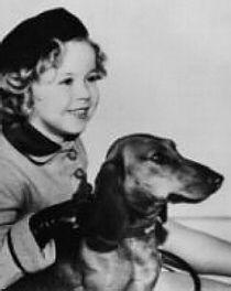 Shirley Temple And Dachshund Dachshund Dog Dachshund Dachshund