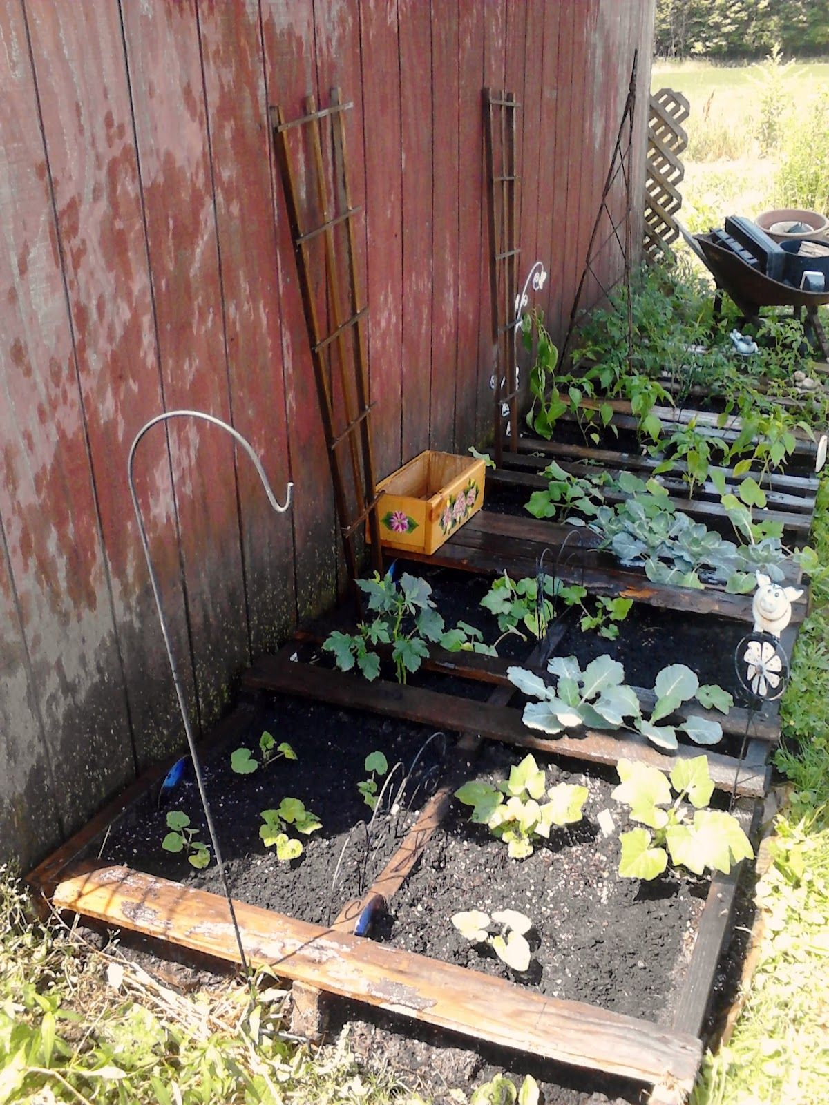Medium Of Pallet Gardens Pinterest