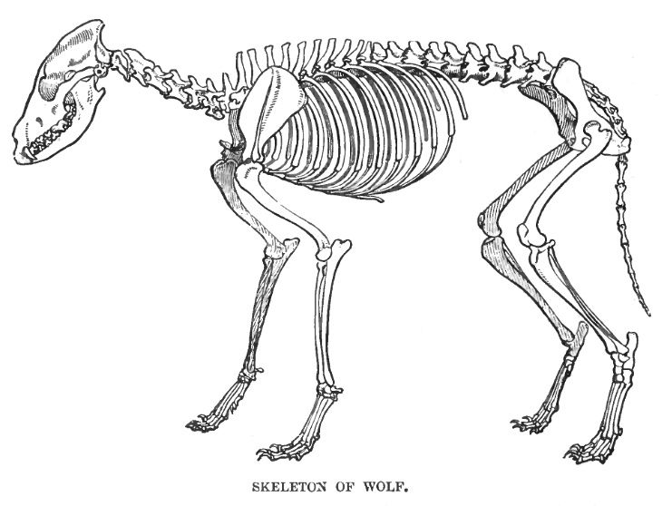 Moose Skeleton Diagram Schematics Wiring Diagrams