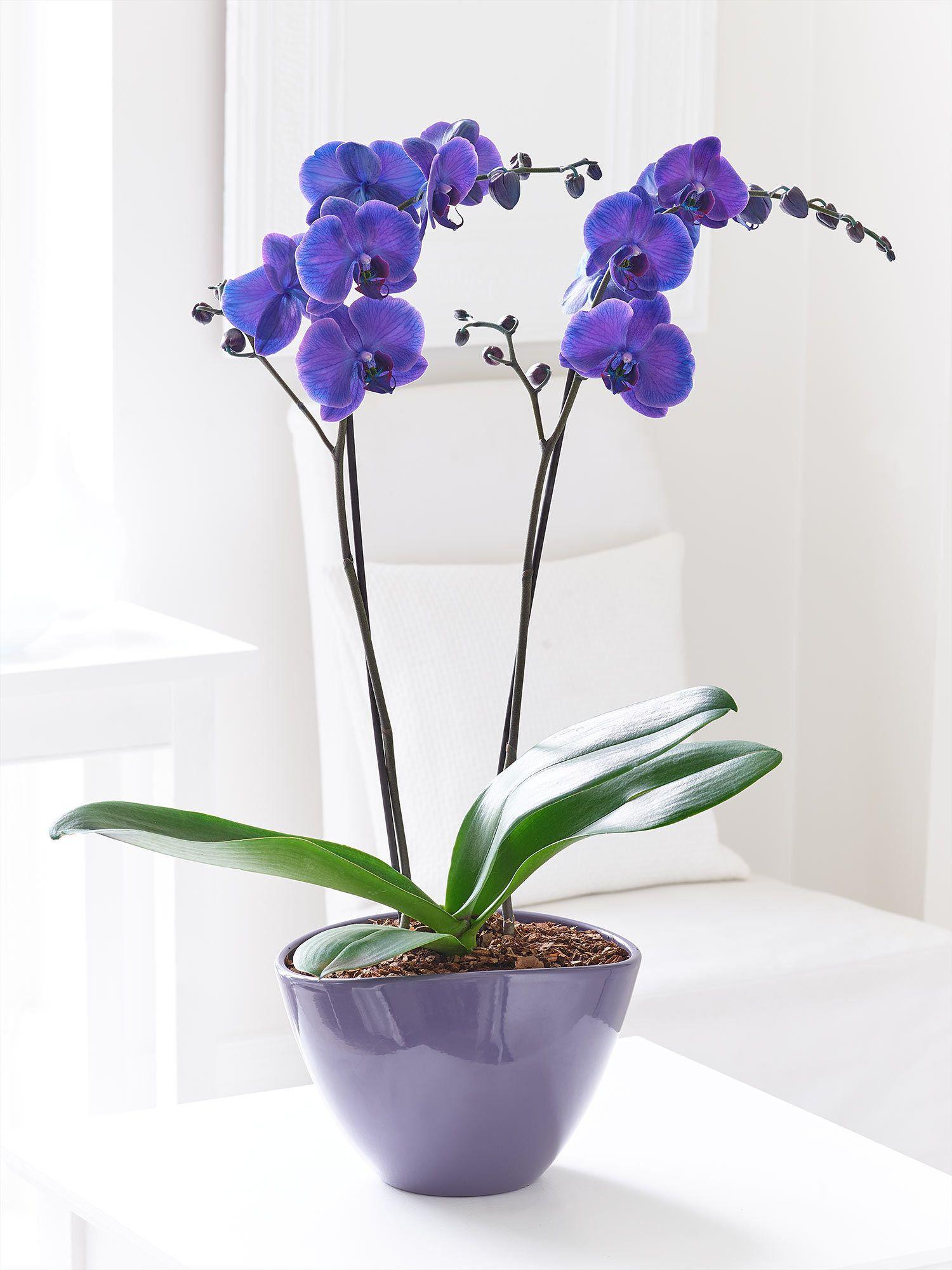 48 Interflora Floral Belleza