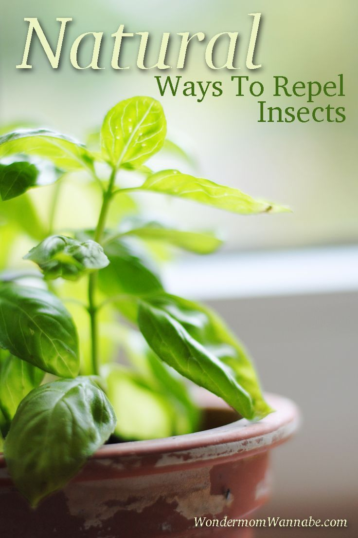 Natural Ways To Repel Insects Insects Natural And Gardens