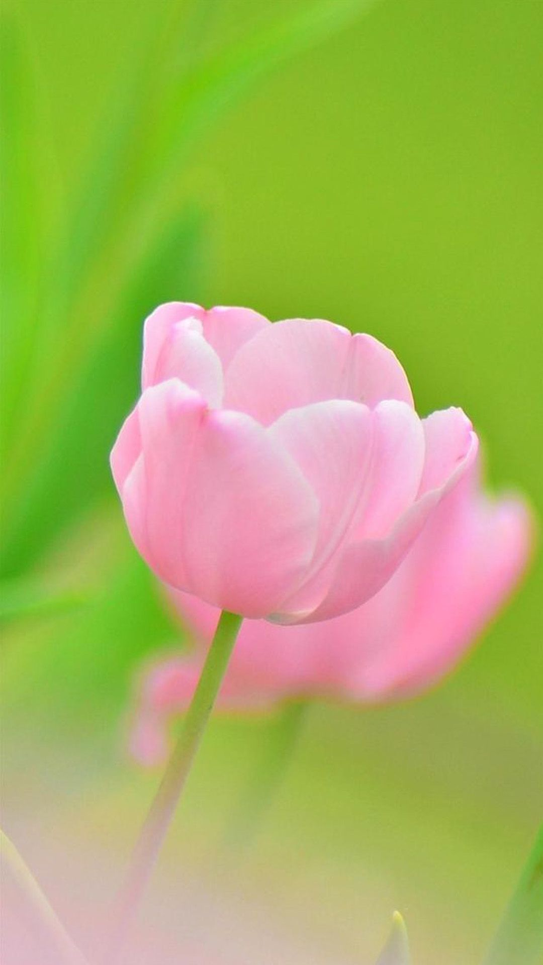 Pink Flower Bokeh Macro iPhone 6 wallpaper | Flower, Wallpaper ... for Green And Pink Flower Wallpaper  45ifm