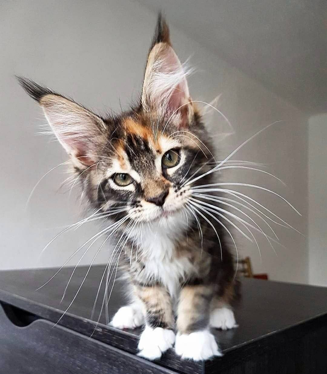 Just. Look. At. Him. 😍😍😍 Kittens cutest, Kittens, Cats