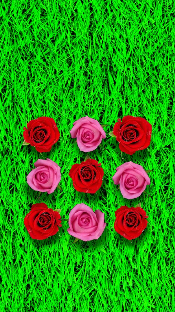 rose garden, iphone pattern lock screen wallpaper. | iphone lock