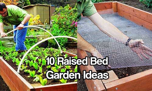 10 Raised Bed Garden Ideas   Pinterest   Garden ideas and Gardens