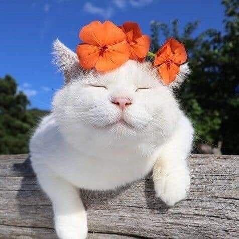 Pin De 阿香 En Pets Gatos Bonitos Gatos Raros Gatos