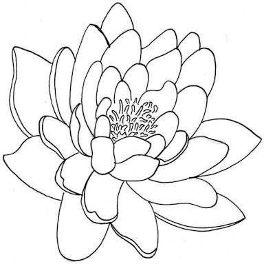 How Students Should Sketch Flower Line Drawings Line Art Drawings Flower Drawing