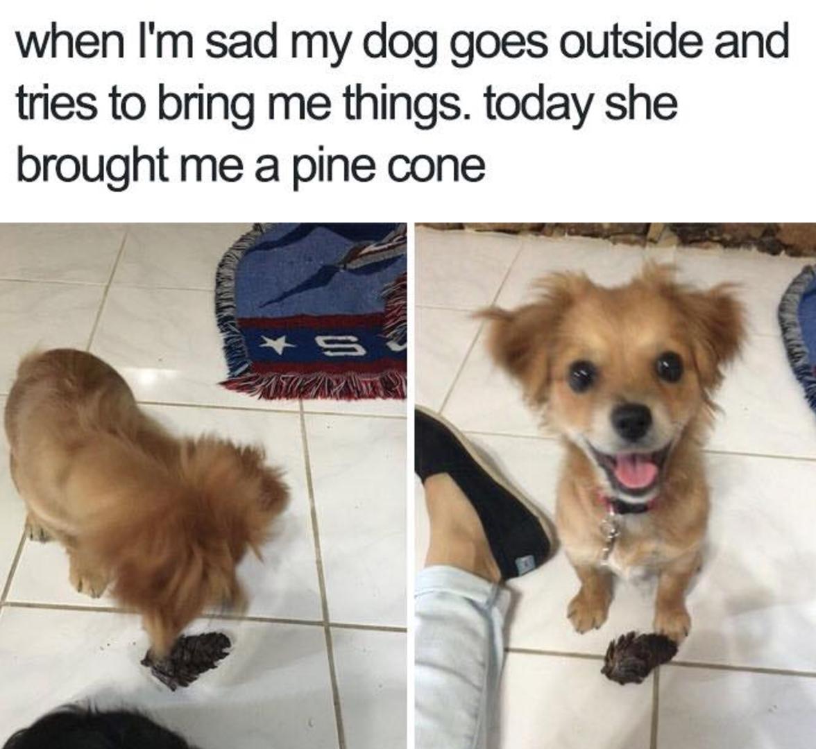You Are Amazing Meme Dog