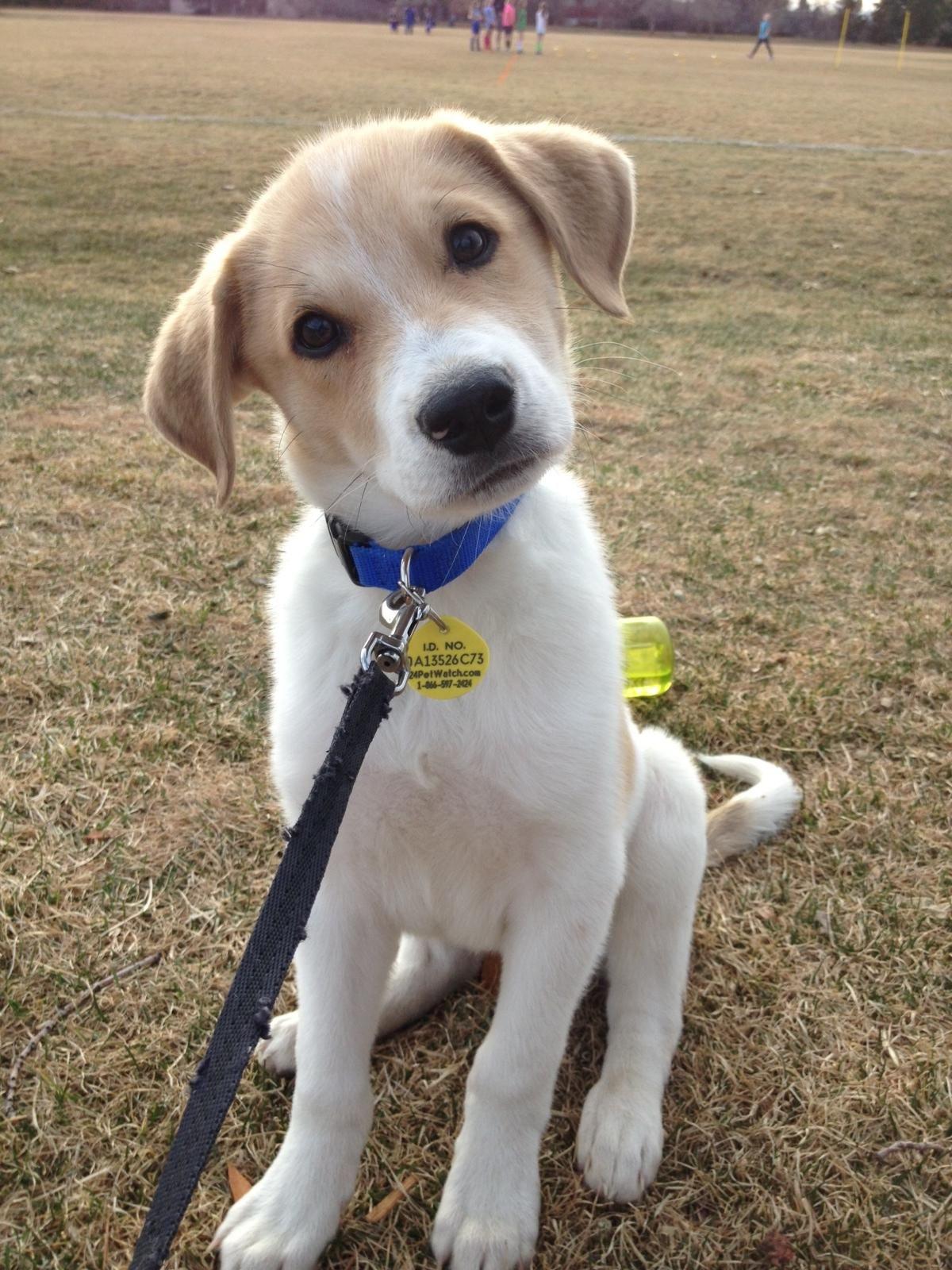 Reddit, meet Scout. Cute dog photos, Animals beautiful