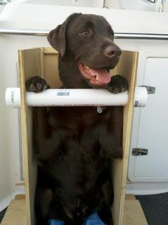 Canine Megaesophagus: Portable Bailey Chair For Travel