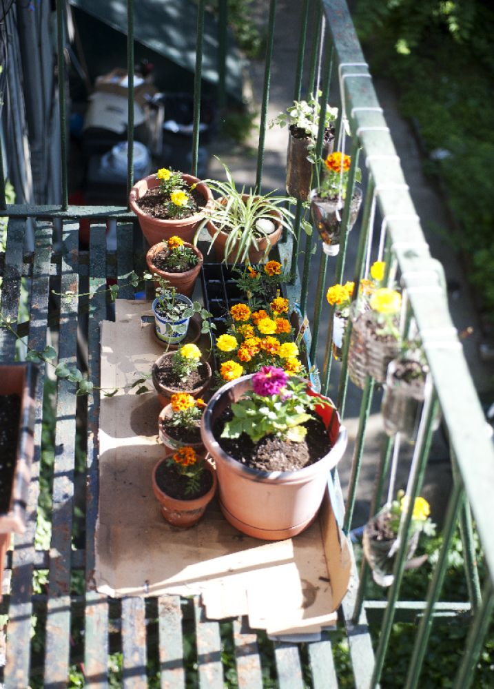 Urban Jungle: Hanging Plastic Bottle Planters And More. Hanging From The  Balcony Railing Is Very Clever. Can Also Be Used To Create A Privacy Wall  If There ...