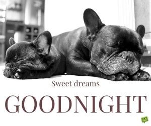 -good-night-quote-images-dog-sweet dreams | Good Night ...
