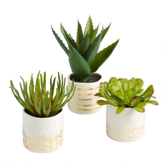 Faux Succulents In Gold And White Ceramic Pots Set Of 3 Faux Succulents Small Fake Plants White Ceramic Planter