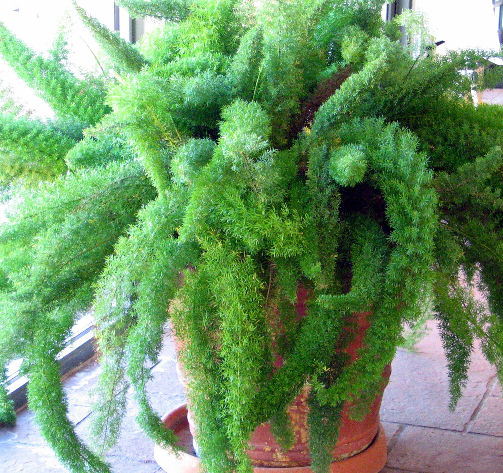 Indoor Plant Types Low Light Houseplant Google Search Houseplants Love