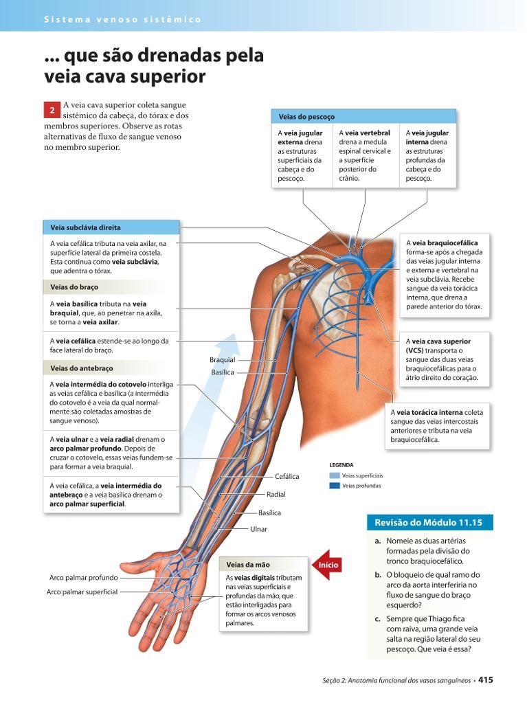 Página 415 | Anatomia | Pinterest