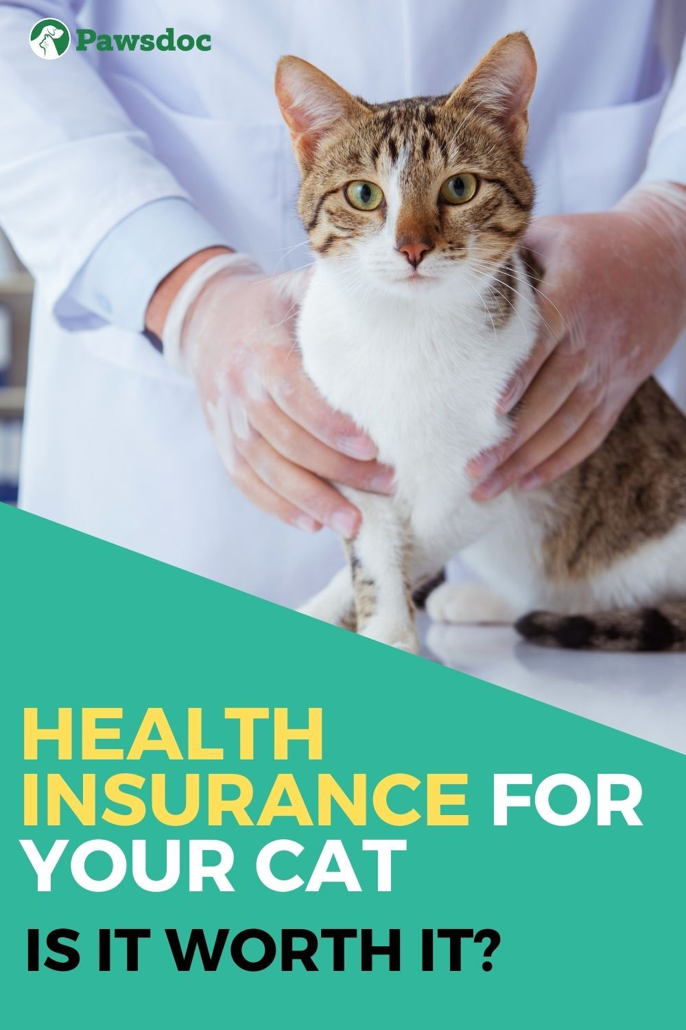 Pet Health Insurance I Everything You Need To Know In 2020 Kitten Health Pet Health Insurance Pet Health