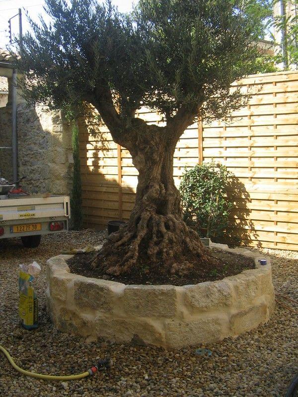 le jardin d\'oliviers - Recherche Google | Extérieur/jardin/piscine ...