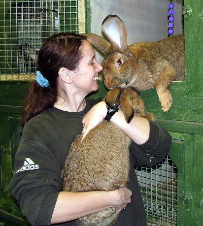 German Giant Rabbit ¦サギ Á†ã•ãŽ ŋ•ç‰©