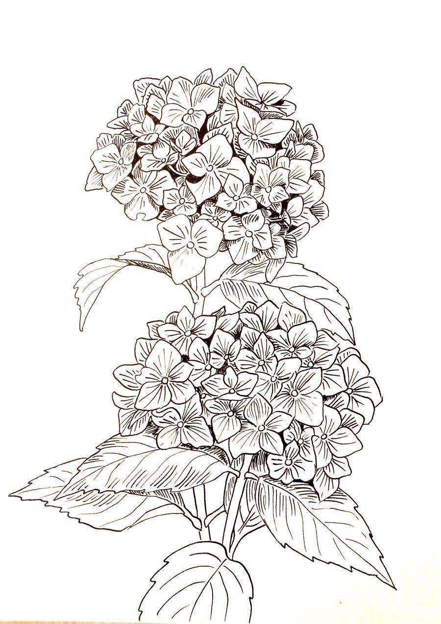 rysunek tuszem kwiaty - halina jaskłowska | Rysunki tuszem ...