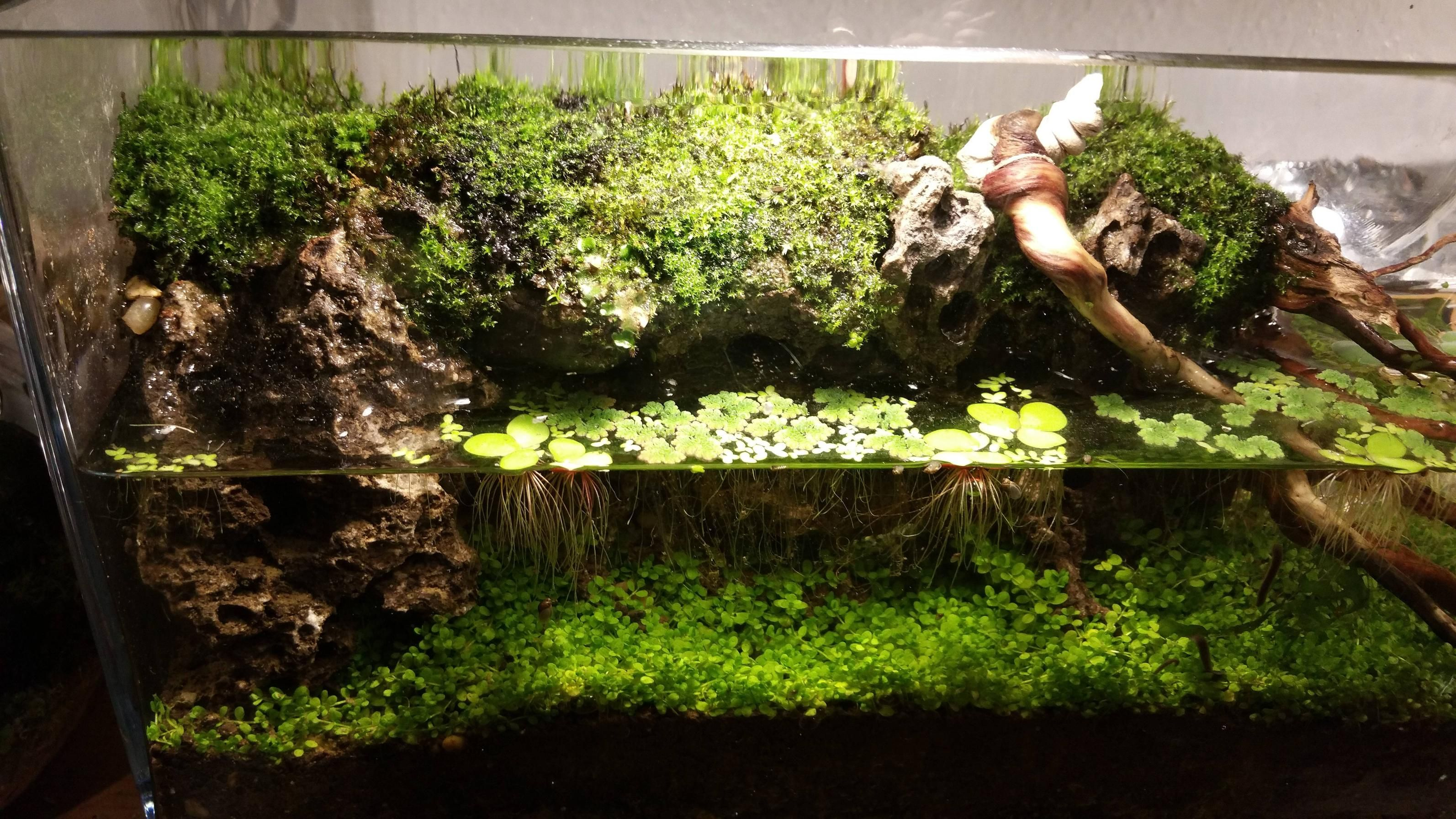 Imgur the most awesome images on the internet vivarium