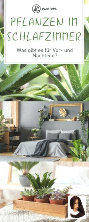 Pflanzen im Schlafzimmer: Vorteile Nachteile und geeignete Arten #pflanzenimschlafzimmer