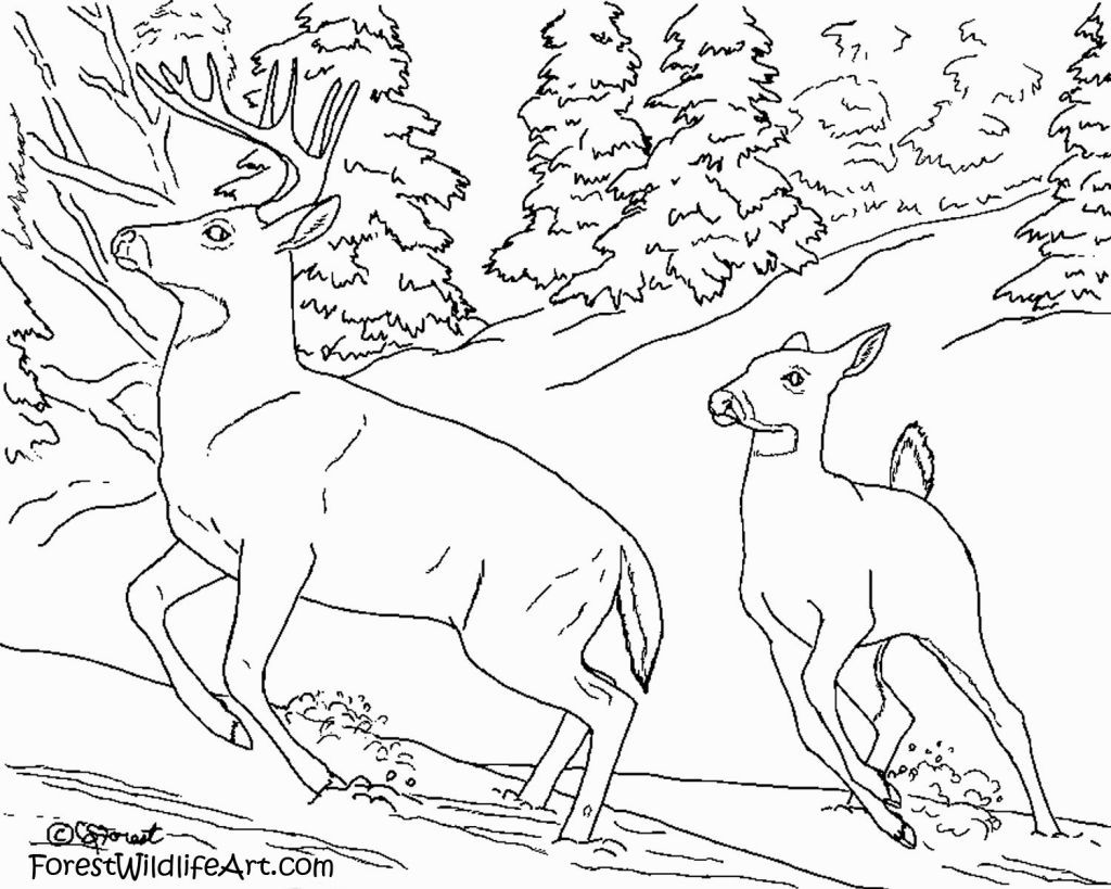 Explore Deer Pictures To Print And More Forest Animals Coloring Pages