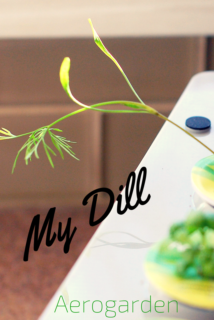 Look how much my #aerogarden dill has grown! | Holidays with the ...