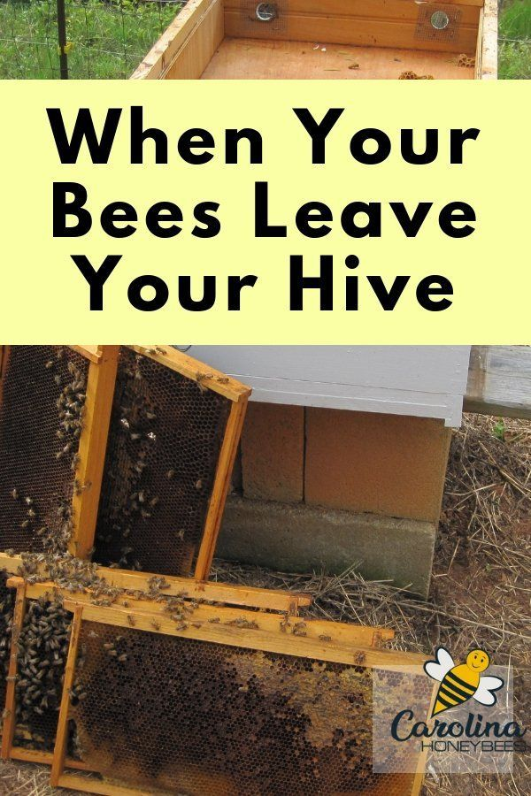 Absconding Bees- Why Bees Leave The Hive | Bee keeping ...