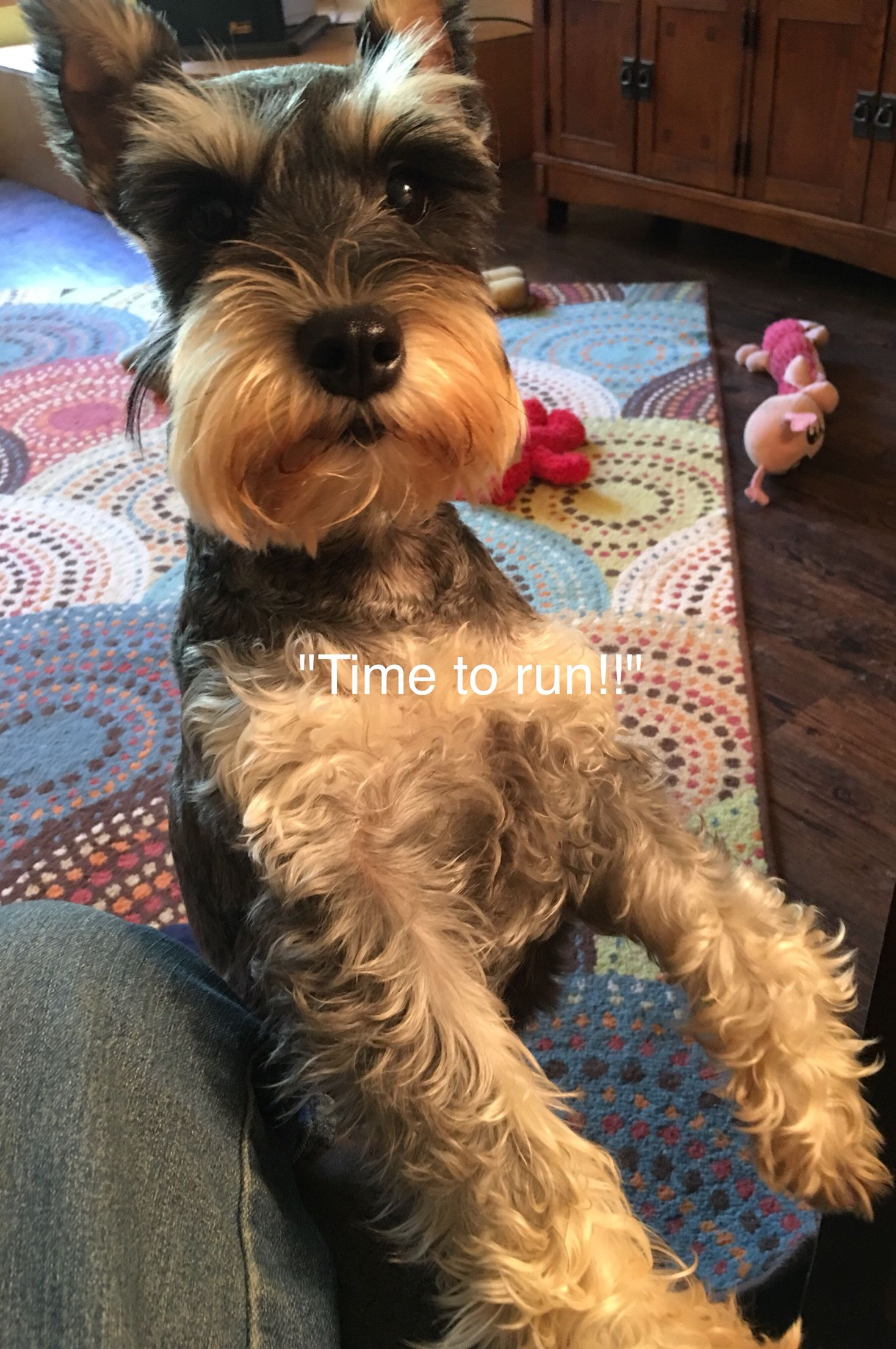 When Mom Says It S Bathtime Animals Miniature Schnauzer Dogs