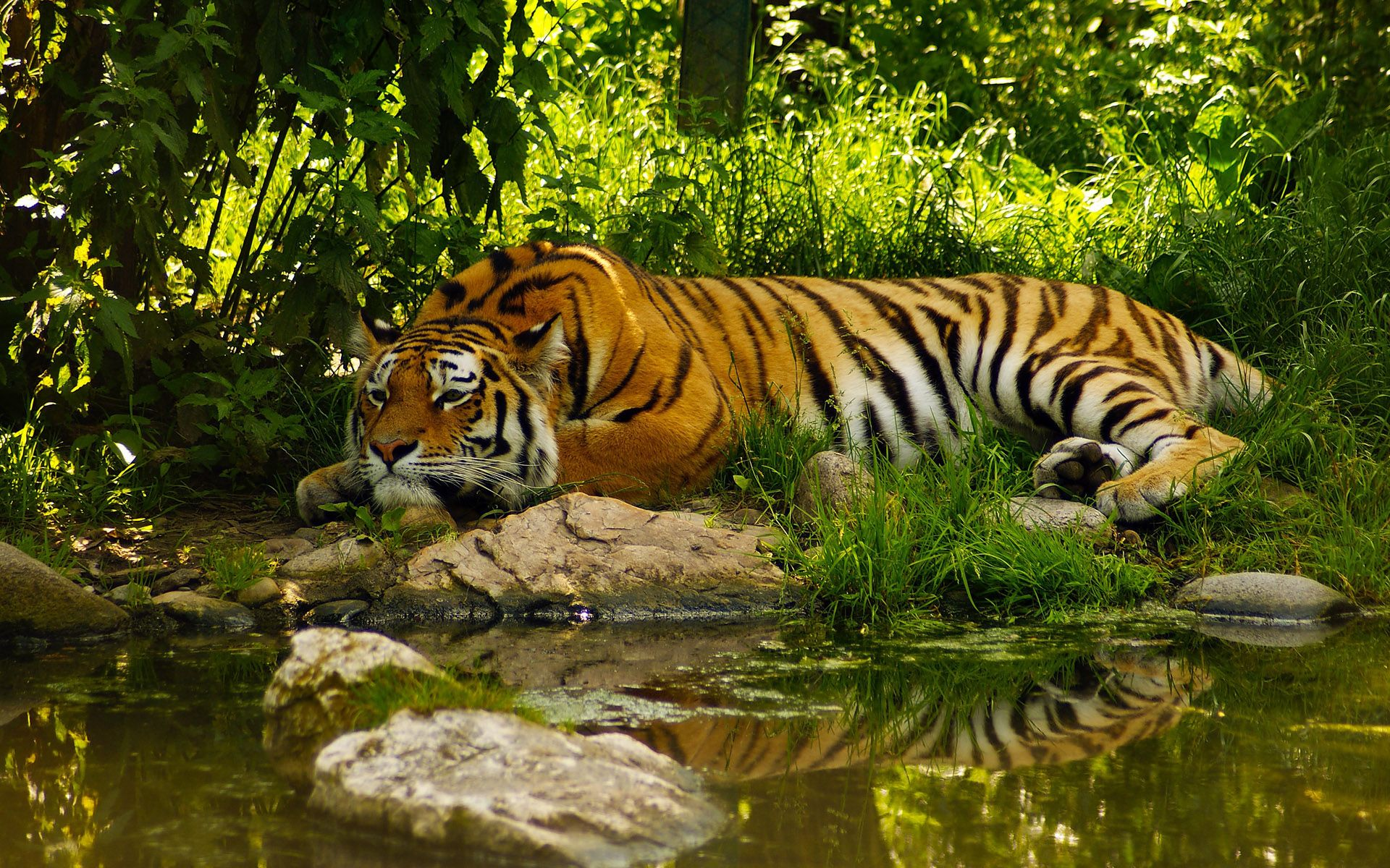 Most Beautiful 4k Nature Pictures Google Search Tiger Wallpaper Animal Wallpaper Nature Animals