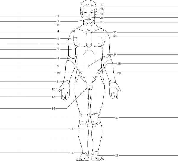 upper body diagram unlabeled wiring diagrams thumbs Cartoon Human Body Parts body planes diagram unlabeled wiring diagram printable pain diagram upper body diagram unlabeled