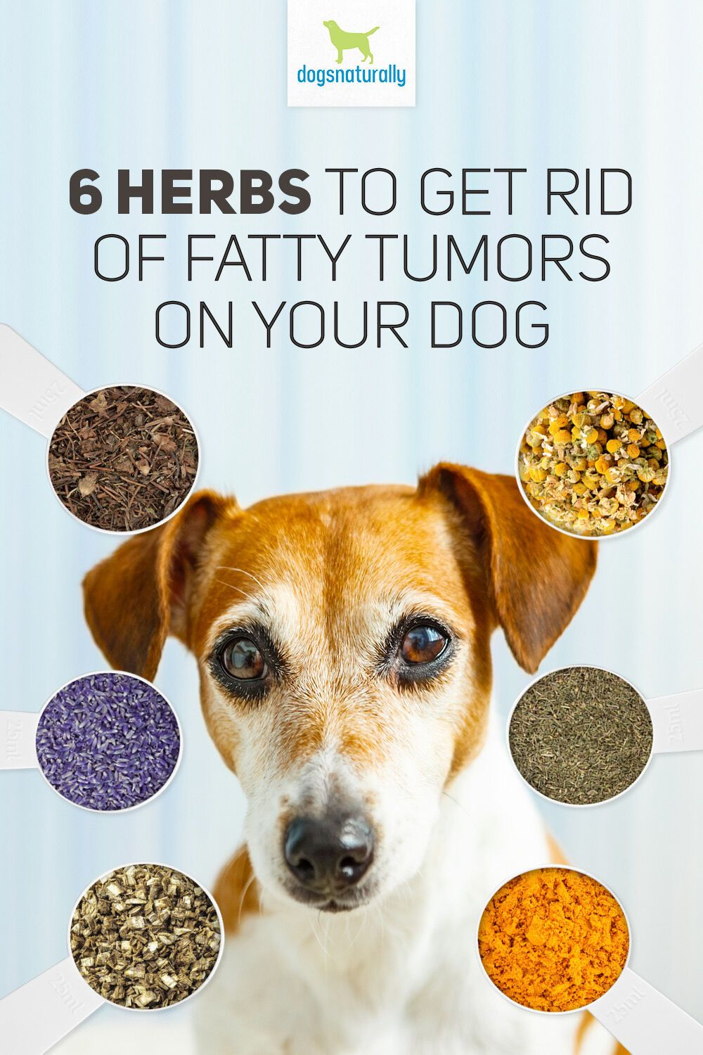 6 herbs to get rid rid of fatty tumors in dogs dogs