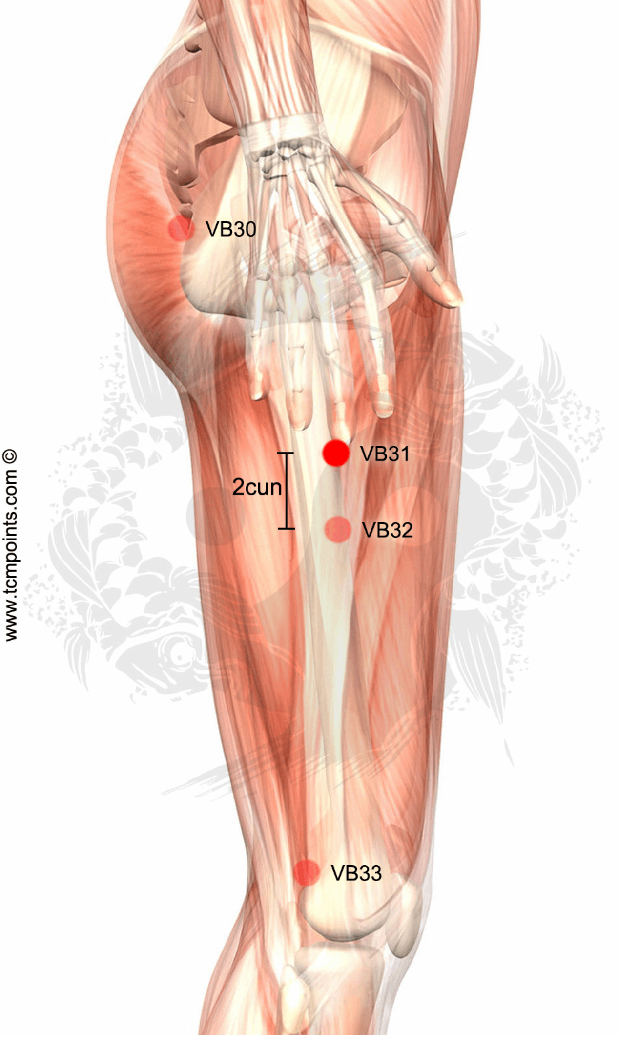 Localización del Punto: En la parte lateral del muslo. Con el brazo ...