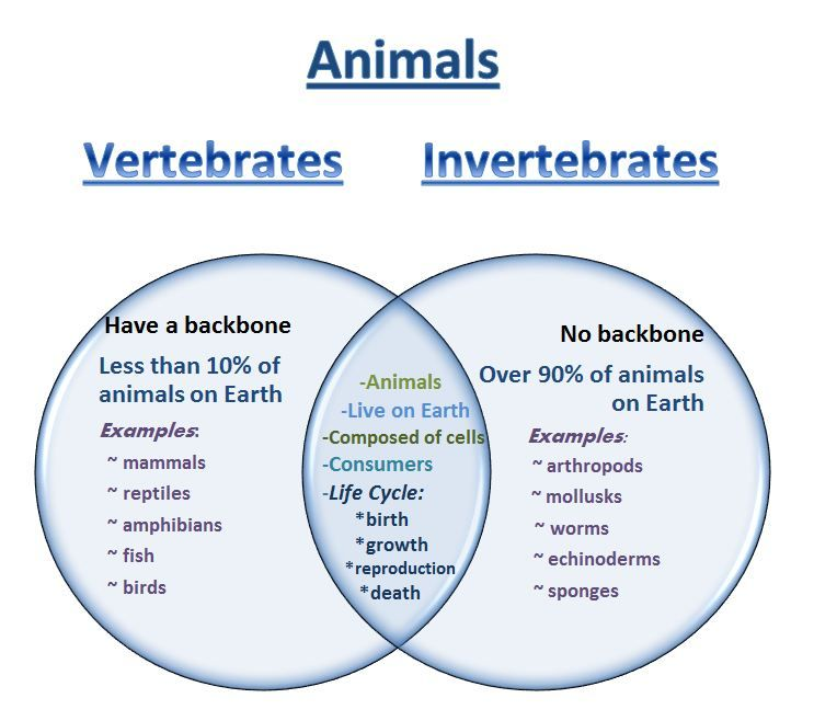 Printable Worksheets myplate worksheets : Vertebrates and Invertebrates Worksheets PDF | Vertebrates ...