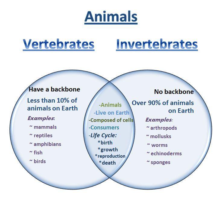 Invertebrates pdf of biology