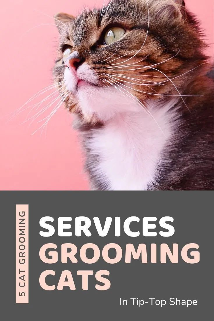 Why Do Cats Lick & Groom Each Other? Does It Mean They