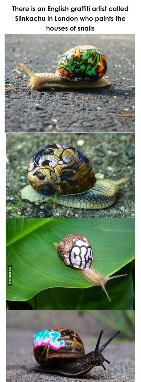 Painted snails
