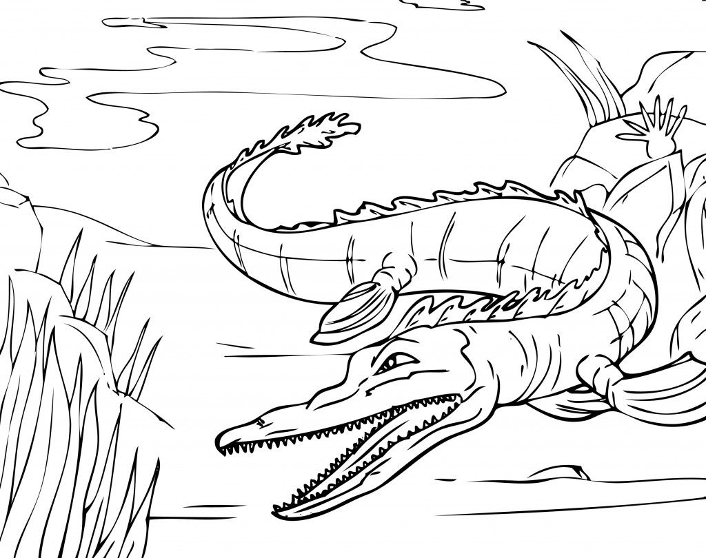 Free Gator Head Coloring Pages Coloring Books Coloring Pages