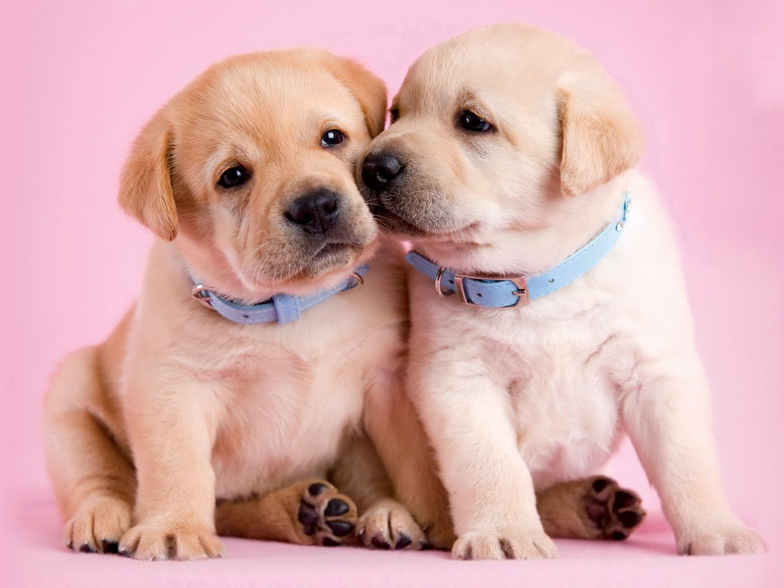 Cute Friendship Wallpapers For Facebook Friendship Day And Cute