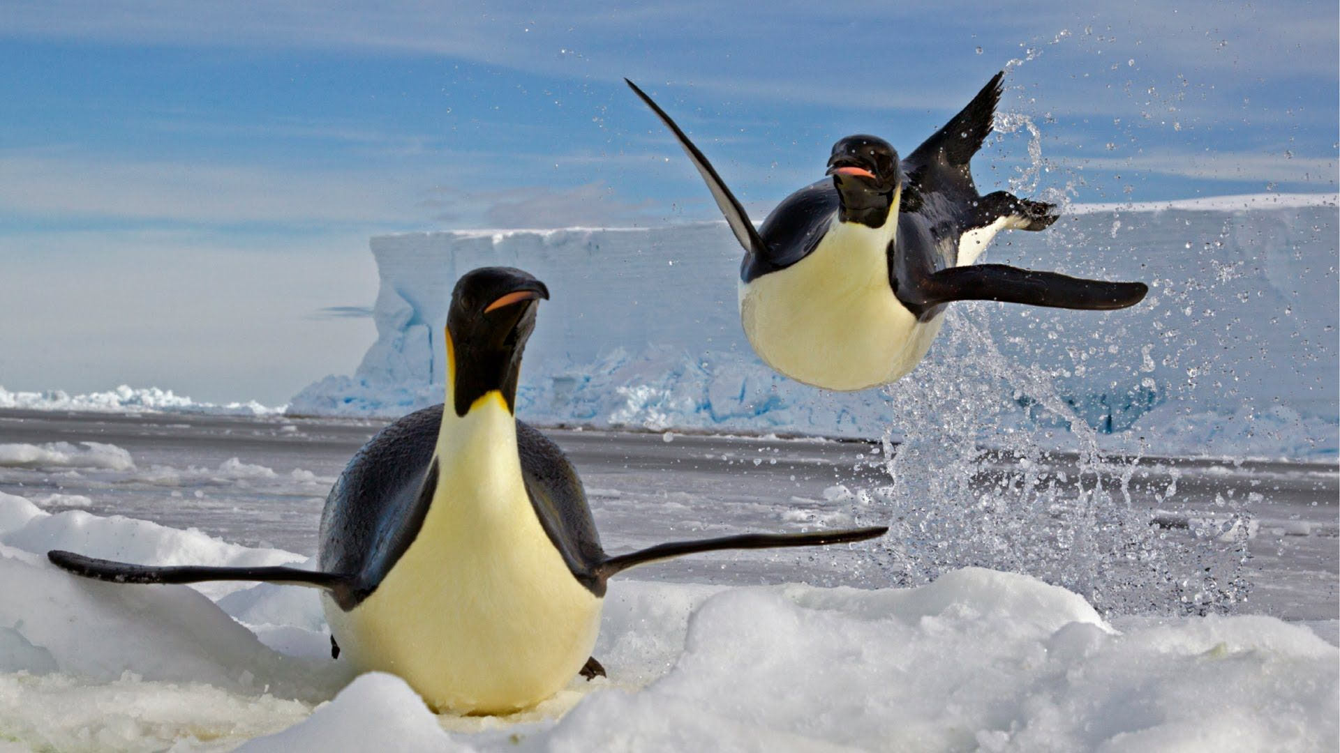 National Geographic Live! - Paul Nicklen: Emperors of the Ice