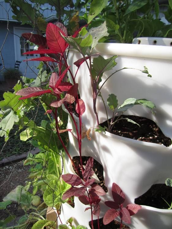 What I learned from vertical gardening using my Garden Tower.