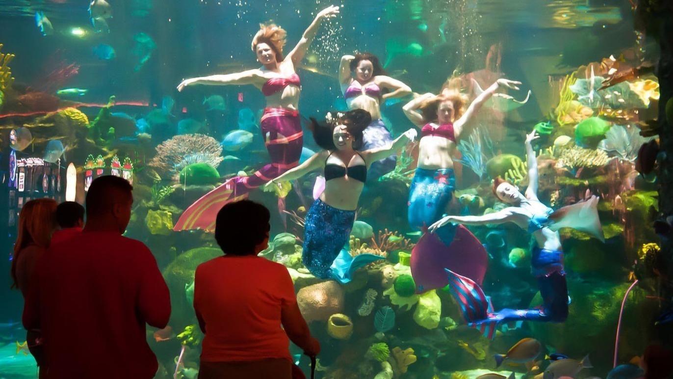 Mermaid Bar & Lounge | Mermaid bar, Bar lounge and Vegas