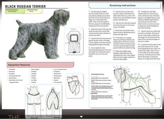 Black Russian Terrier Grooming Instructions Google Search Black