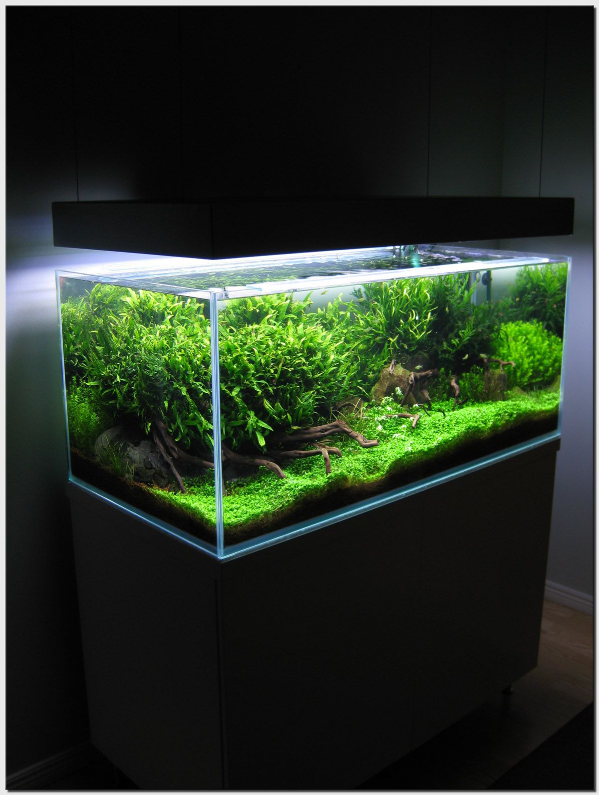 Mini planted aquarium | Planted aquarium, Aquascape ...