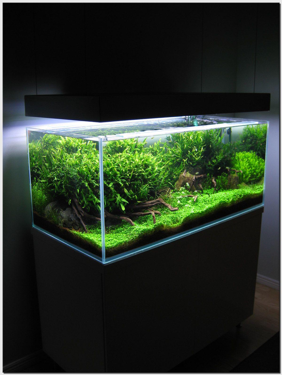Mini planted aquarium | Planted aquarium, Aquascape ...