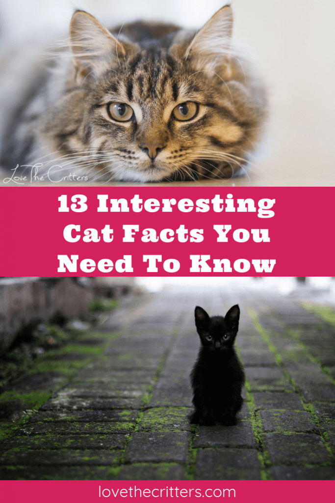 13 Interesting Cat Facts You Need To Know Cat facts