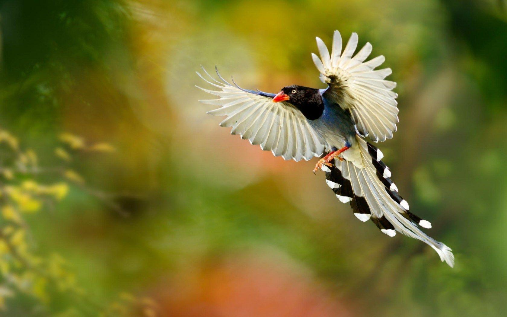 beautiful-bird-wings-hd-wallpaper | nature inspires: birds