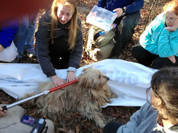 Shaggy The Dog Being Rescued In South Carolina After 5 Years On Her Own Eldad Hagar From Hope For Paws And 40 Volu Animal Rescue Stories Dogs Amazing Stories