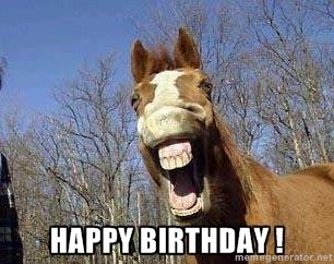 Horse Meme Happy Birthday Horse Meme Generator